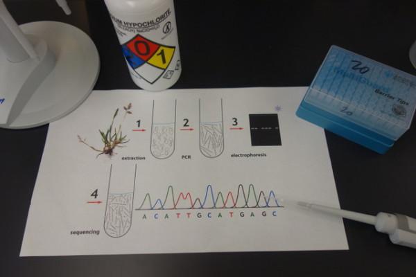 2-DNA_process