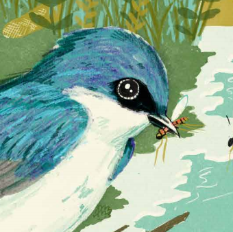 illustration of swallow eating a bug