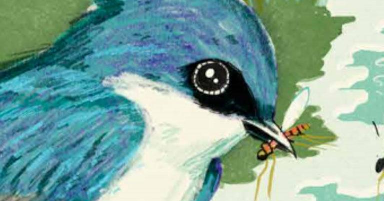 """Lake Awake"" honoured for its illustrations"