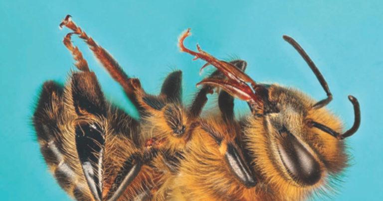 Cottage Life: Beyond the Honeybee