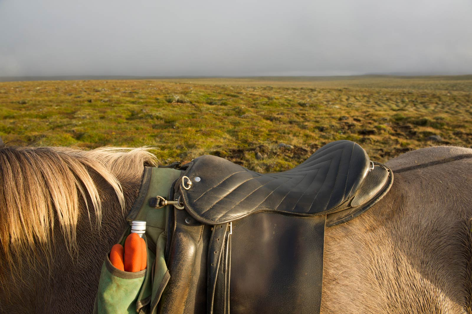 An Icelandic horse stands with saddle on in Iceland.