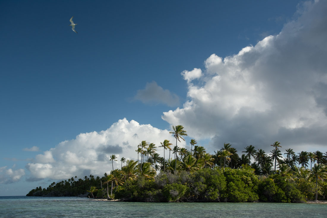 Coral atoll with palms
